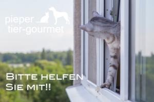 Katzenfalle - Kippfenster